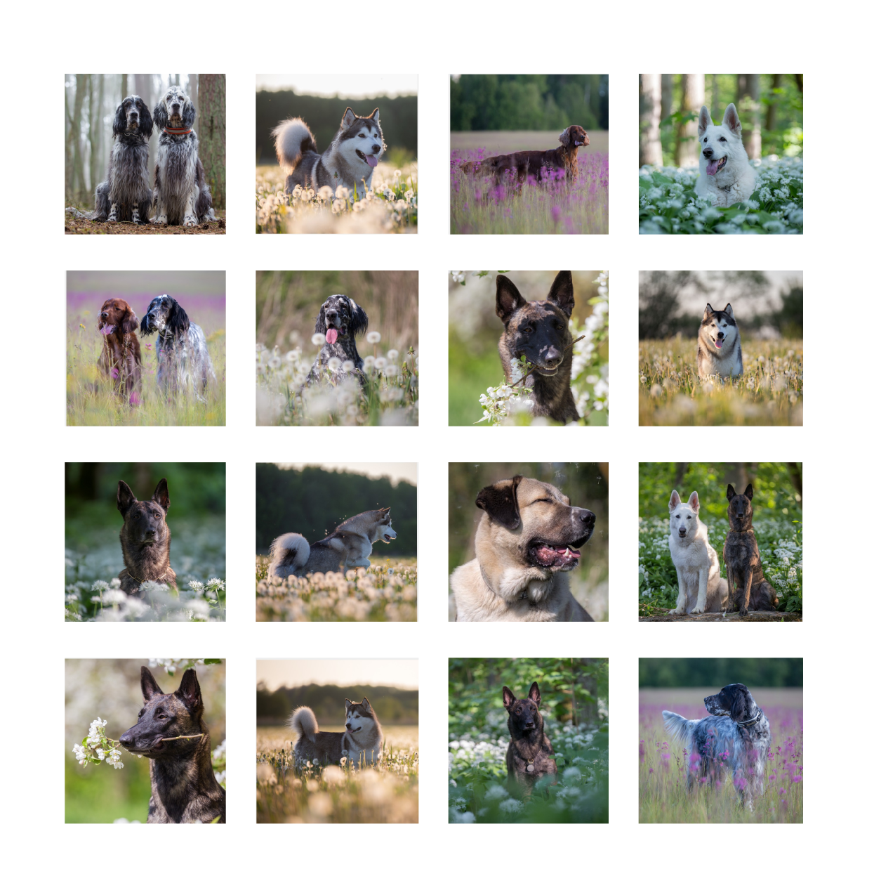 A dataset of images of 16 various types of dogs for machine learning